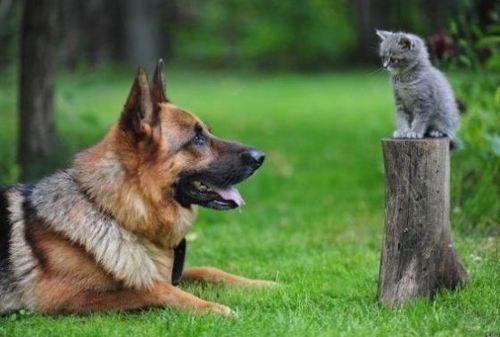 dogs kitten cute - 8126052096