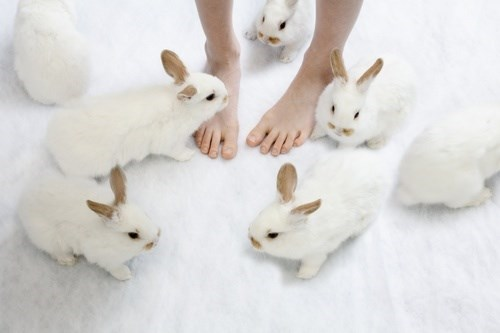 bunnies cute bunny slippers - 8126062848