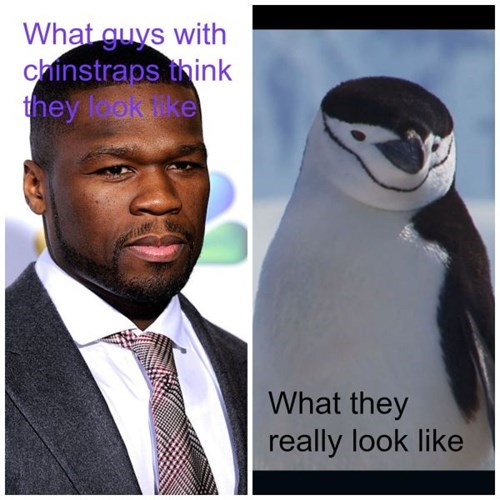 facial hair poorly dressed penguins g rated - 8126068480