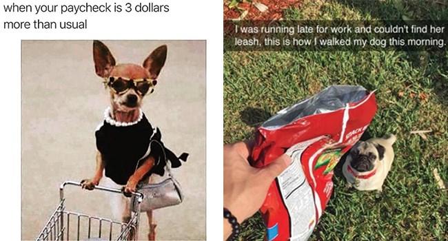 dogs dog memes funny dog memes funny memes doggo funny dogs doggo memes - 8126213