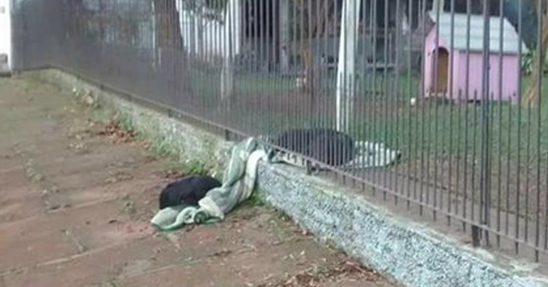 dogs sharing heartwarming cold homeless beautiful - 8126725