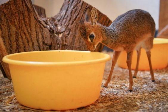 aww antelopes baby cute - 8127237