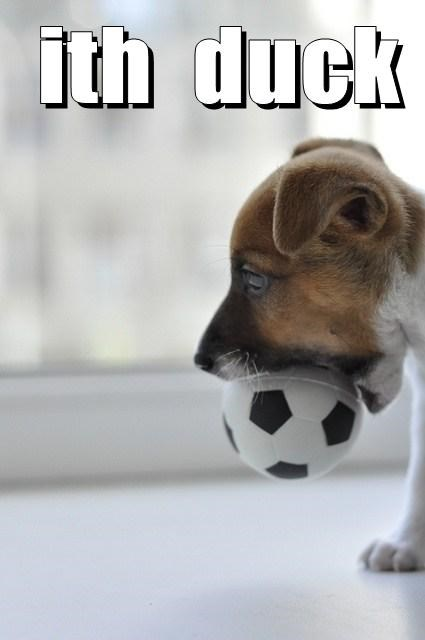 dogs puppies ball cute playing - 8127815936