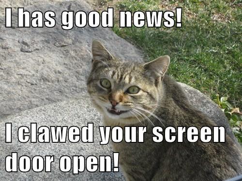I has good news!  I clawed your screen door open!