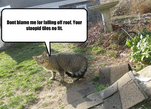 Dont blame me for falling off roof. Your stoopid tiles no fit.