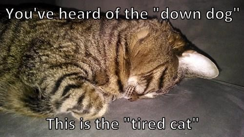 "You've heard of the ""down dog"" This is the ""tired cat"""