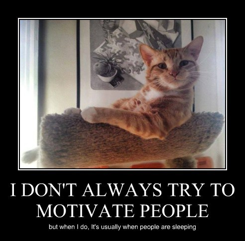 annoying Cats cute the most interesting man in the world - 8128609792