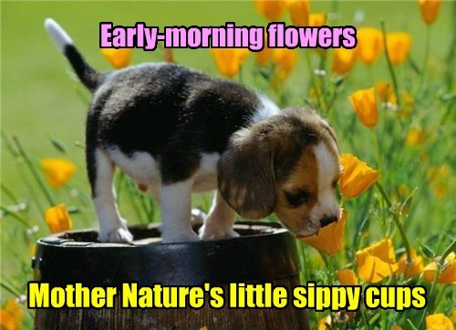 dogs spring puppies cute flowers