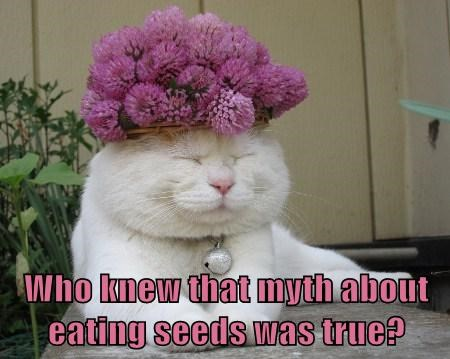 myths cute flowers Cats funny - 8128788224