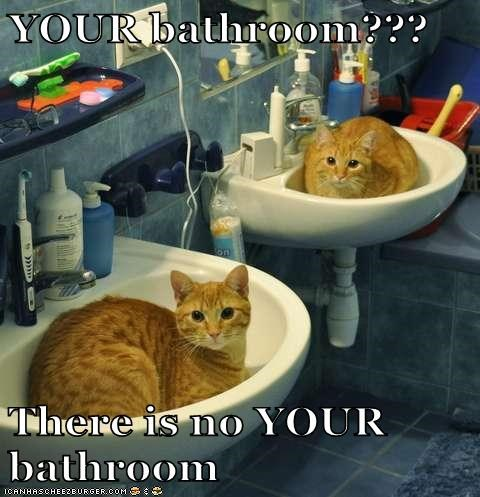 sink bathroom Cats funny