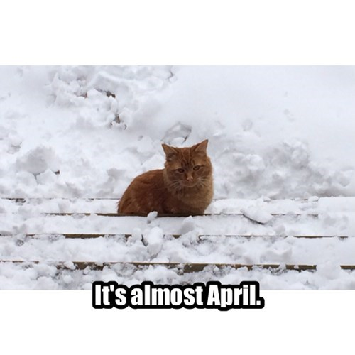 spring annoying snow april Cats - 8128858880