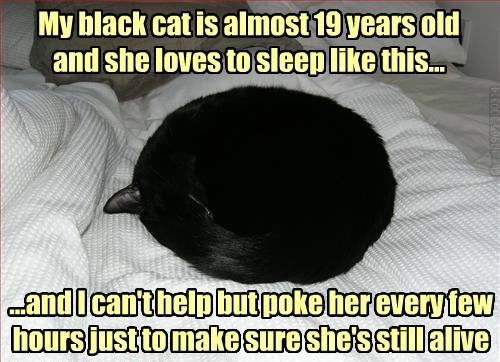 old cute Cats sleeping - 8128902656