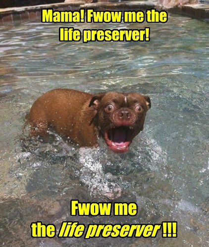 dogs swimming scared funny