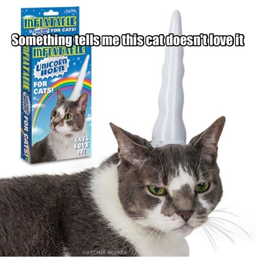 unicorn angry Cats funny - 8129361920