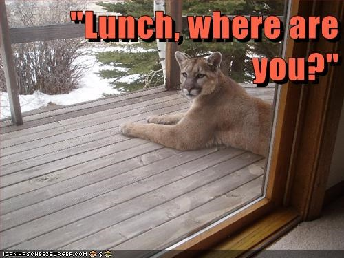 cougars lunch funny - 8129721088