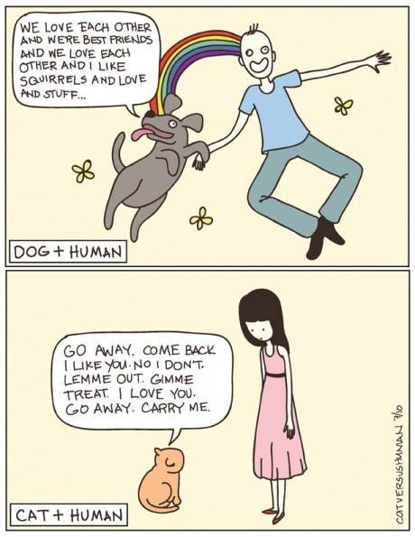 dogs Cats web comics - 8129755904