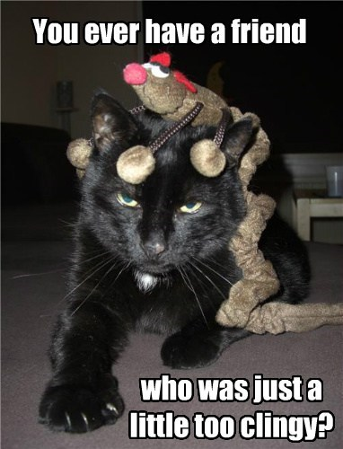 Cats annoyed toys - 8129857536