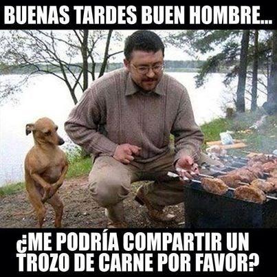 perros Memes animales - 8129923328