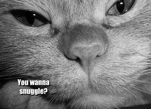 Cats cute snuggle - 8130094080