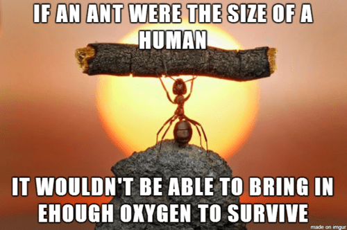 Fun Fact ants science funny - 8130111232