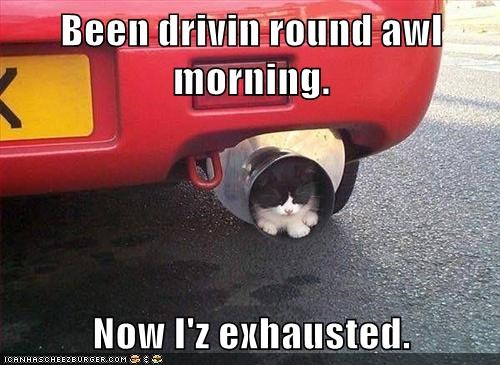 puns,cars,Cats,exhausted