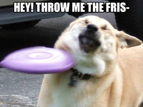 dogs not ready frisbee funny