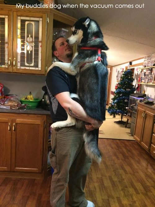 dogs,im scared,funny,vacuum