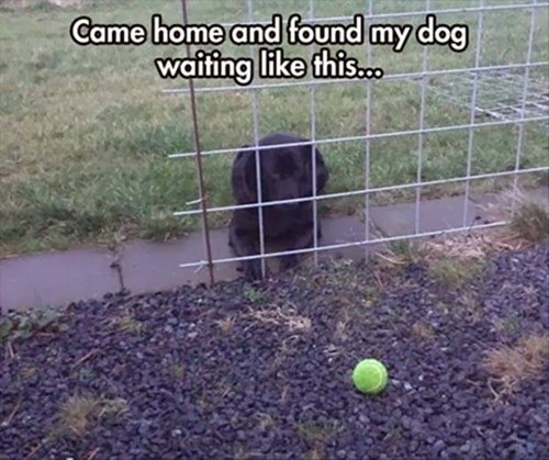 dogs ball confused funny - 8130182144