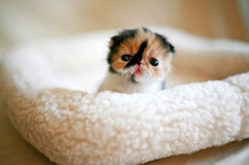 so cute kitten so lonely