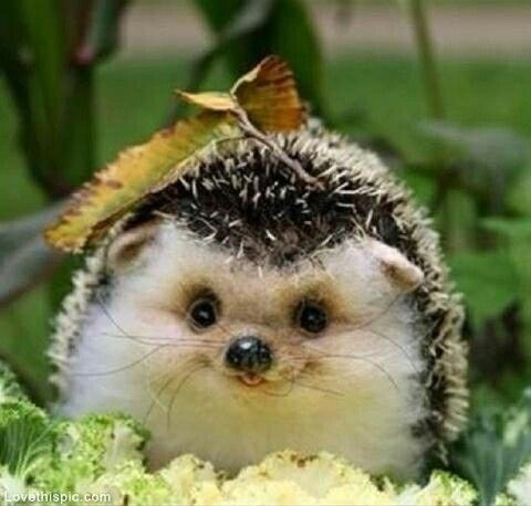 leaf cute hedgehog smile - 8130197760