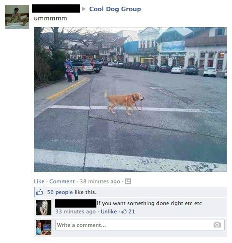 dogs leash pets failbook g rated
