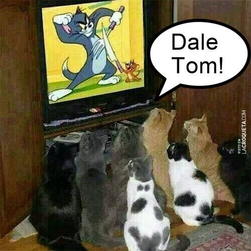 gatos bromas viñetas Memes animales - 8131110912