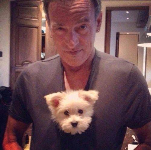 dogs,cute,bruce springsteen