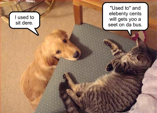 dogs rivals Cats funny - 8131164928