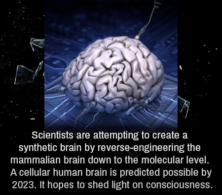 brain,science,synthetic,funny