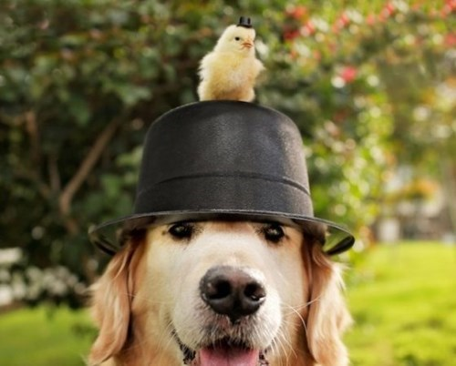 dogs chicks friends hats cute - 8131453952