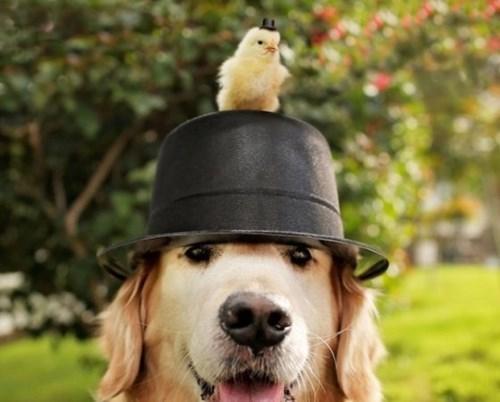 dogs chicks friends hats cute - 8131453952