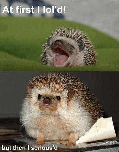 lol hedgehog serious funny - 8131499776