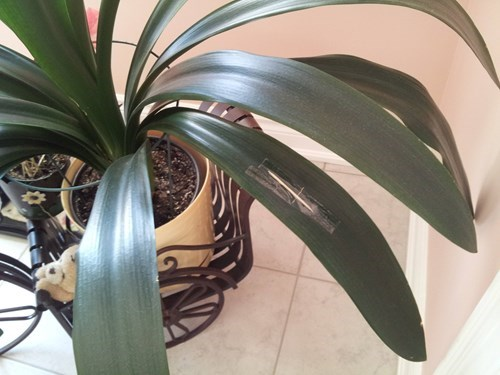 plants there I fixed it repair - 8131658496