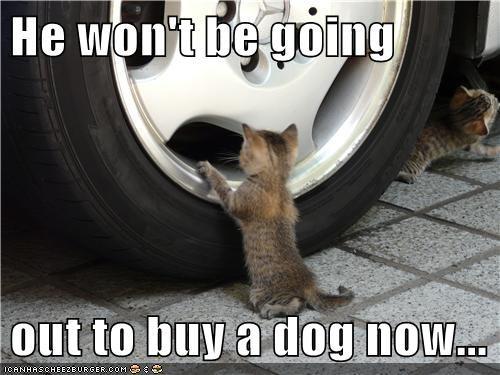 kitten cars cute Cats - 8131940352