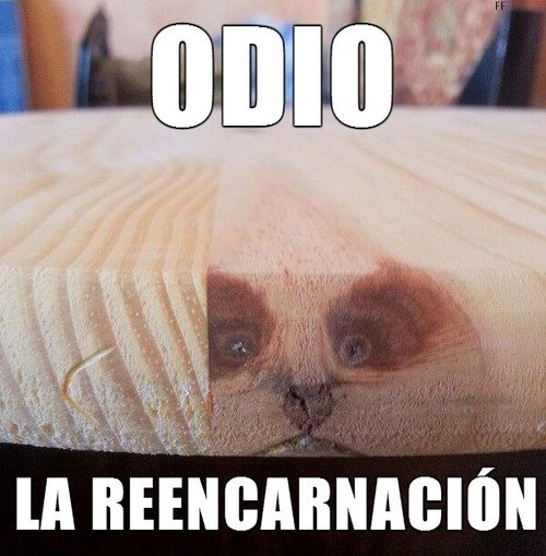 gatos bromas Memes animales - 8132510464