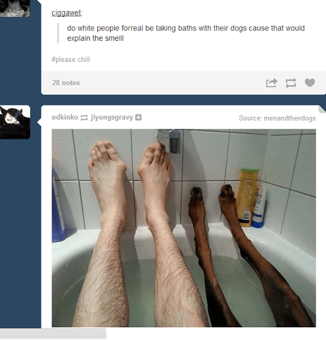 dogs,pets,tumblr,juxtaposition