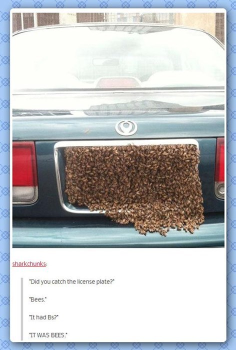 creepy cars bees license plate - 8132649216