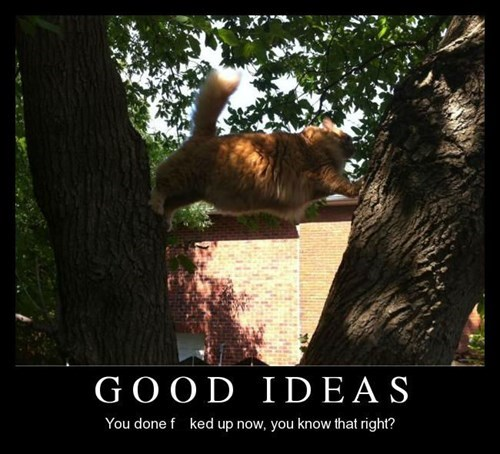 bad idea Cats funny