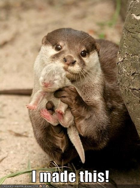 Babies cute otters - 8132695040