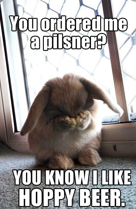 beer puns bunny funny after 12 g rated - 8132749568