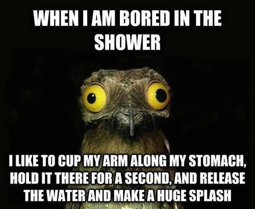peculiar potoo,showers