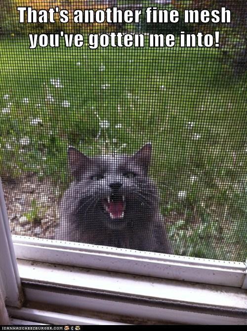 Cats cute funny puns - 8132836864