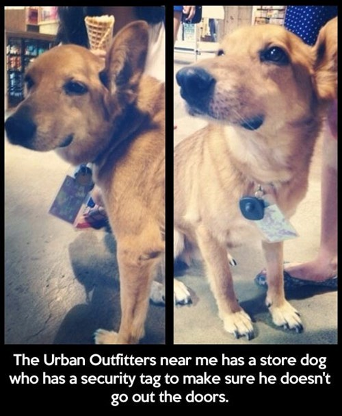 monday thru friday dogs retail work urban outfitters cute - 8132841472