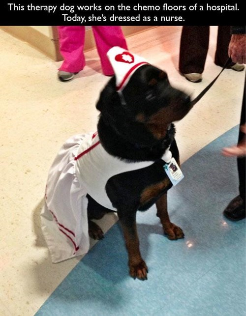 monday thru friday dogs nurse work - 8132845056
